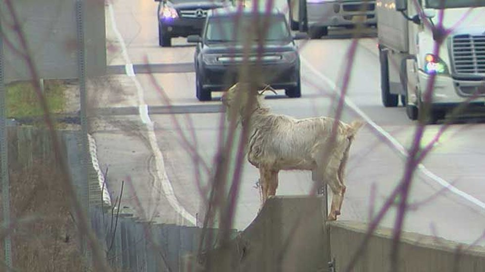 Whenever someone tries to catch Houdini, he disappears. (Source: WAVE 3 News)