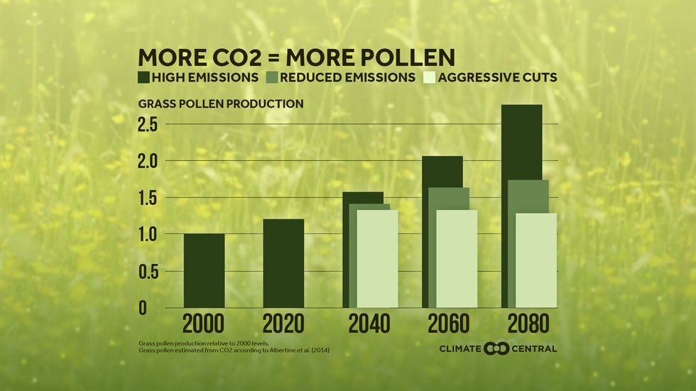 Carbon dioxide has a significant impact on pollen production.
