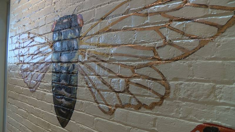 Those at Idlewild found the 'Zombie Cicada' in a Louisville cemetery.
