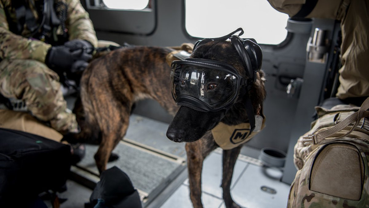 Callie, a search and rescue K-9 for the 123rd Special Tactics Squadron, rides a UH-60 Black...