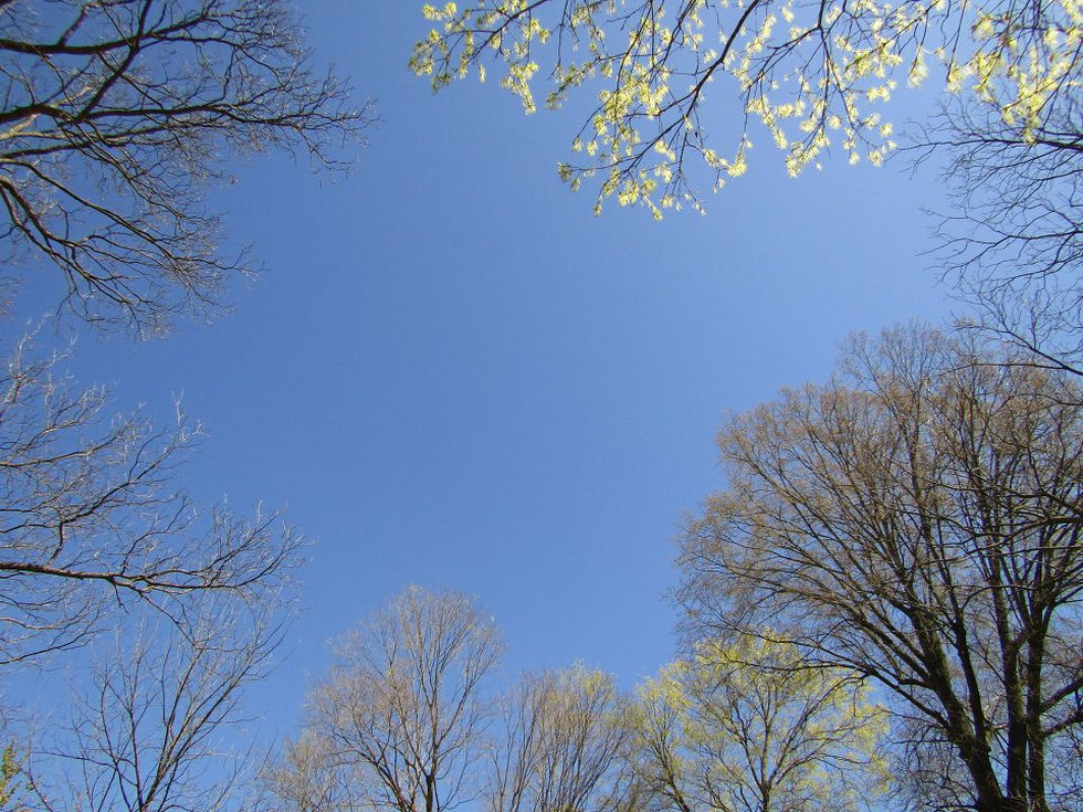 Trees are starting to bud throughout the Heartland.  (Source: cNews/James Gullage)