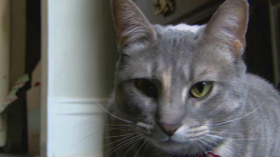 The proposal would expand animal welfare rules in Louisville.