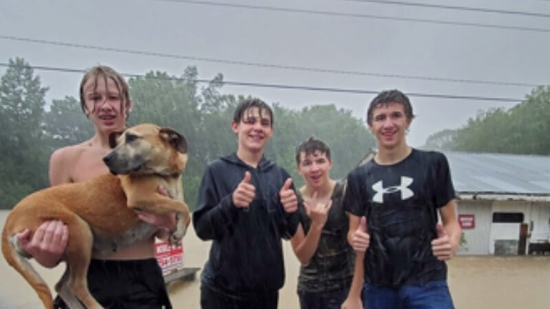 Four boys in Ohio County jumped into action to save a dog's life on Sunday afternoon when they...