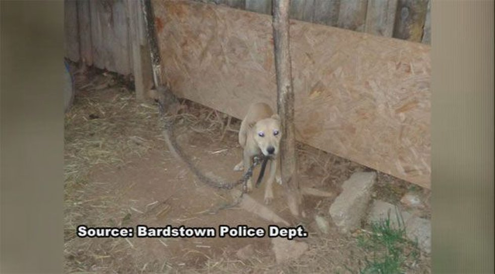 A total of nine dogs were found in the backyard.