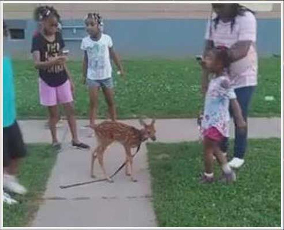 Someone has taken a fawn and tried to turn it into a pet in Louisville, sparking outrage....