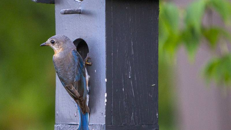 Birds across the South and Midwest are dying from an unusual and unexplained illness.
