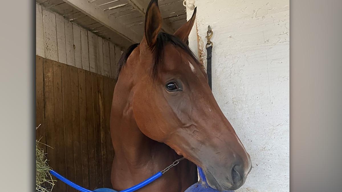 Sam Aguiar's horse, Breonna