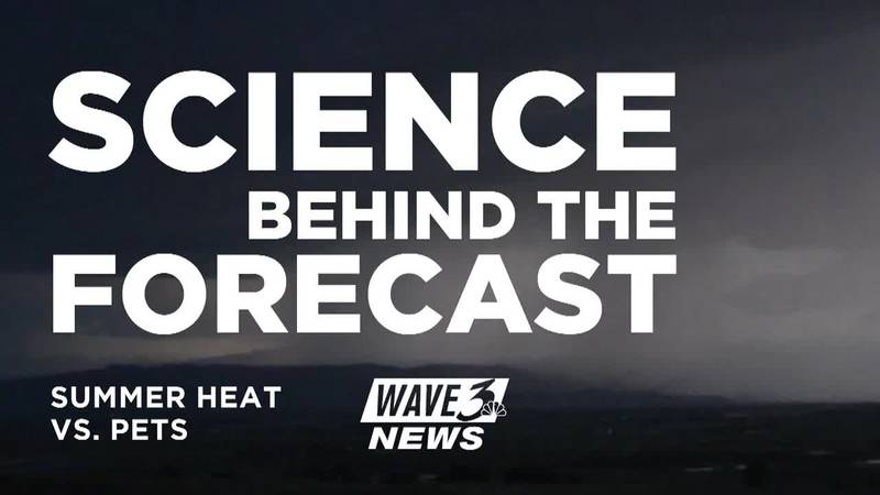 Science Behind the Forecast: Protecting pets in the summer heat (5/31)