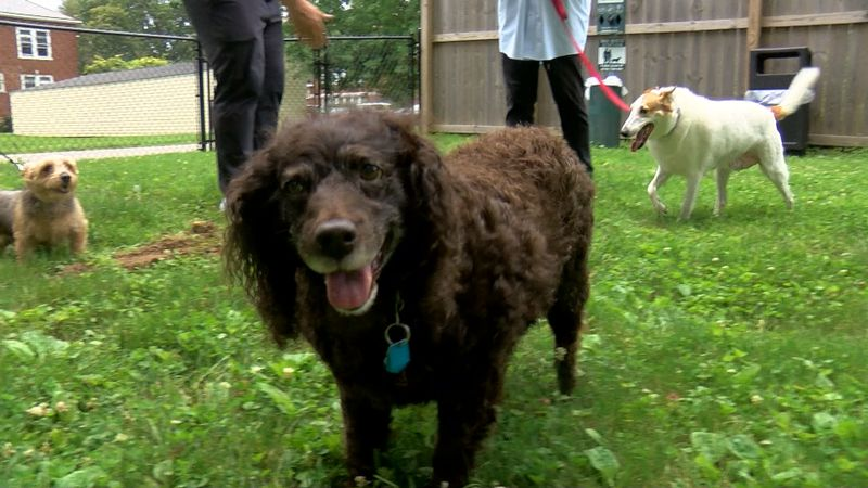 For pups and their pals living at the Masonic Home Louisville assisted living facility, today...