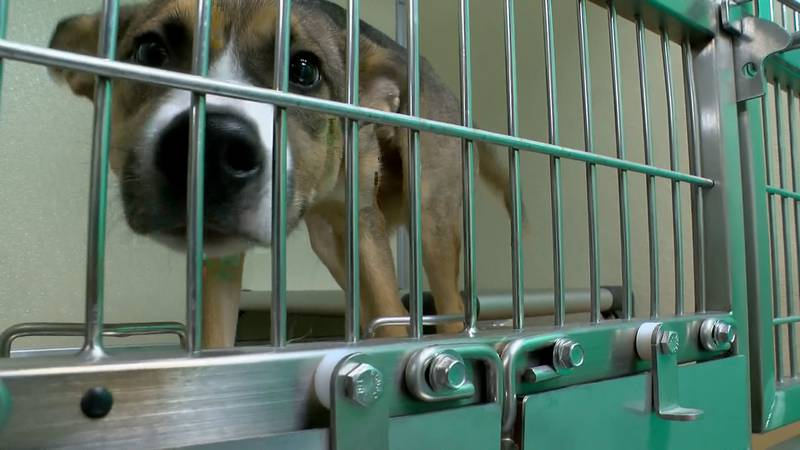 The owner of a private company requesting a $99 payment to pick up stray pets was a former LMAS...