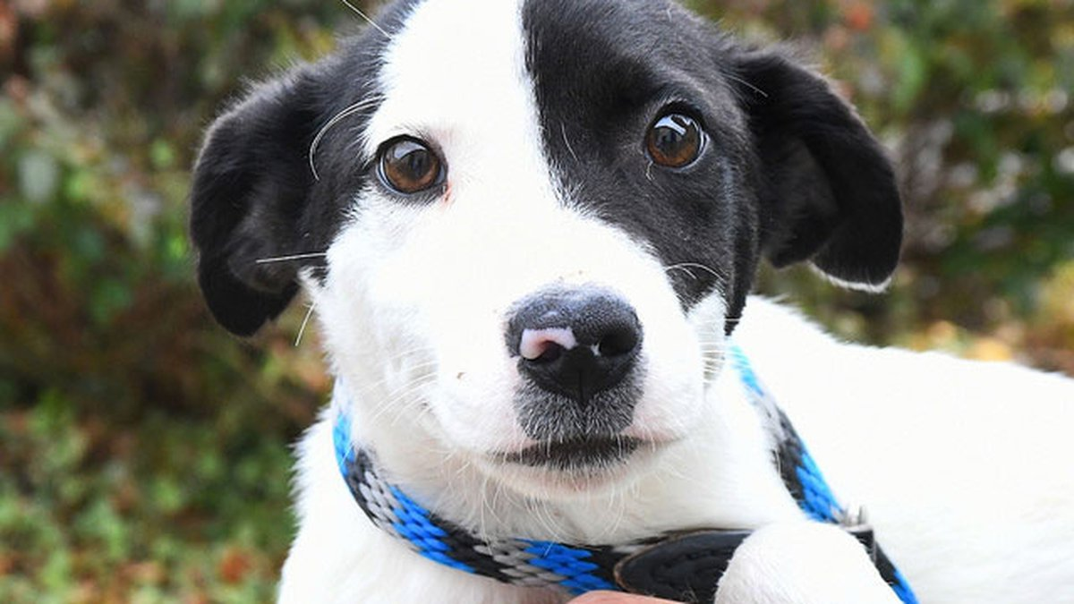 Each week, the Kentucky Humane Society is sharing photos of the adorable cats and dogs...