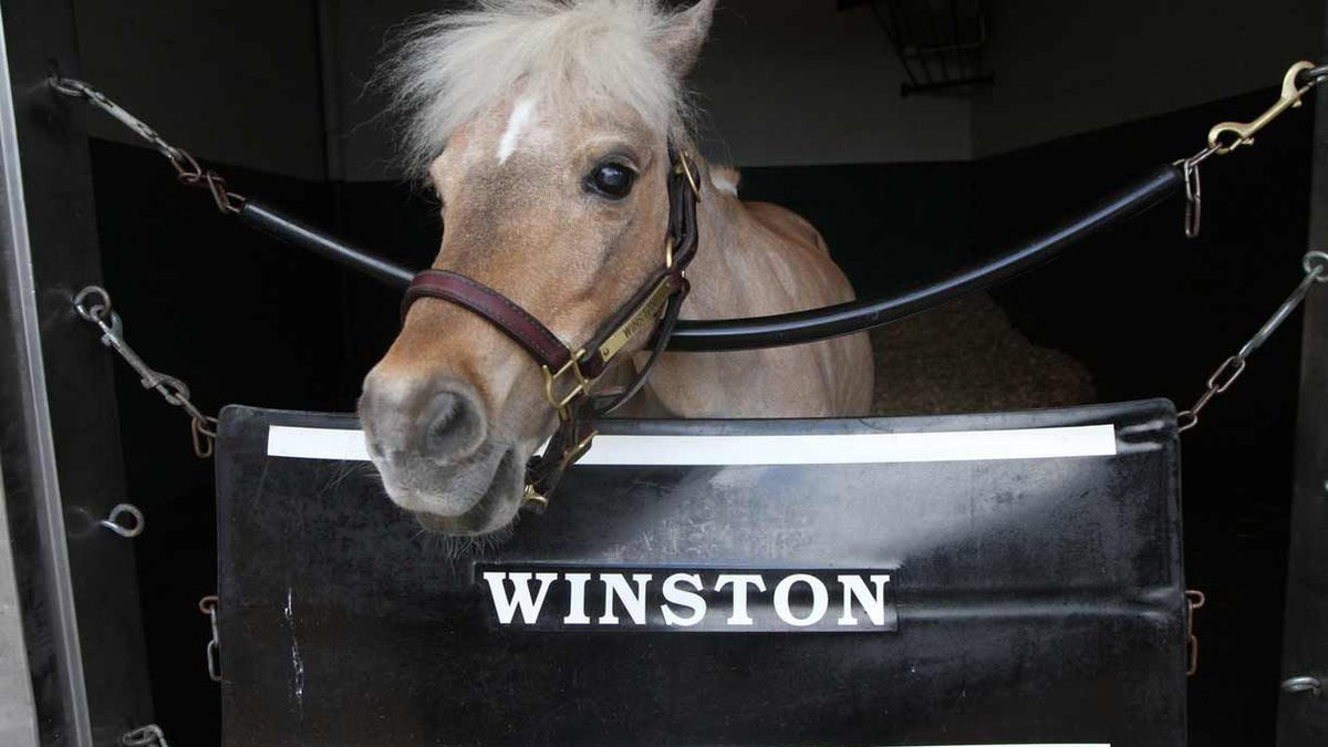 Winston, the ambassador for the Kentucky Derby Museum died. (Source: Kentucky Derby Museum)