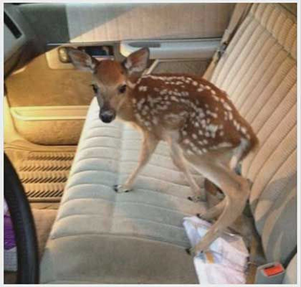 The deer has showed up in social media posts and now has its own Facebook page. (Source:...