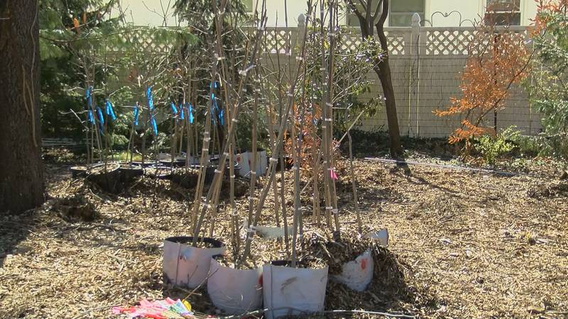 The Community Canopy program provides free trees for Louisville residents and shows them the...