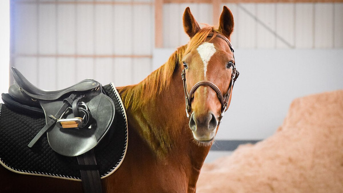 Horse owners who are looking for the next ideal home for their animals may be in luck.