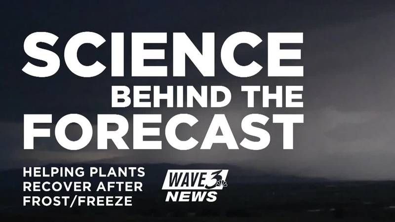 Science Behind the Forecast: Helping plants recover after a frost or freeze