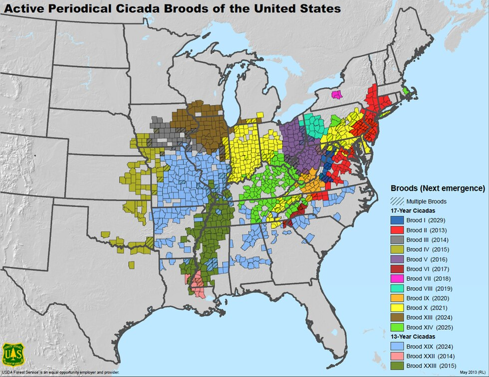 The cicadas are expected in Indiana, Kentucky, Michigan, Illinois, Ohio, New York, Tennessee,...