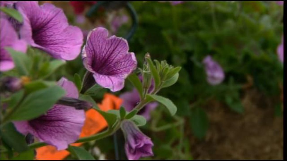 Protect your spring flowers during frost advisory (Source: WOIO)