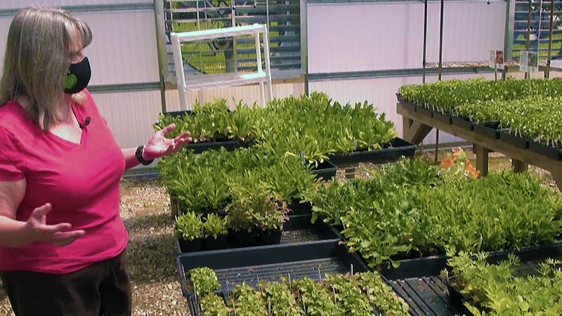 Louisville Grows Program Director Lisa Dettlinger told WAVE 3 News thieves hit the greenhouse...