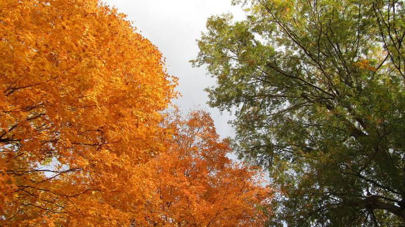 Brilliant fall colors can be seen throughout the Heartland.  This is the case in Humbolt,...