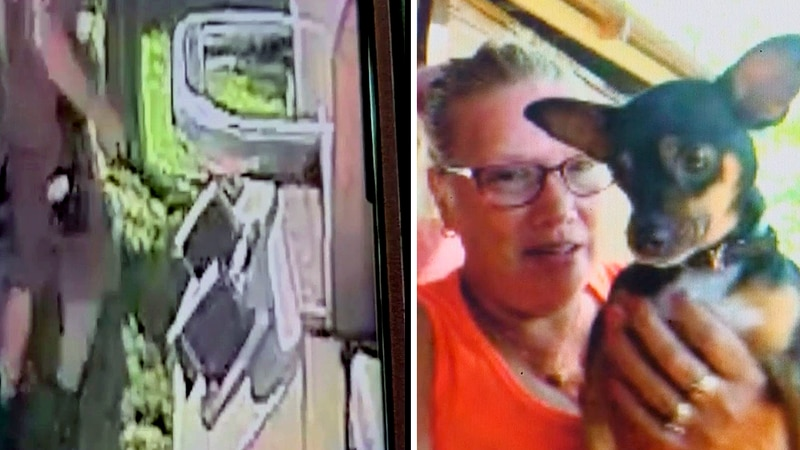 Michelle Shelton caught a UPS delivery person kicking her chihuahua, Harvey, in the face.
