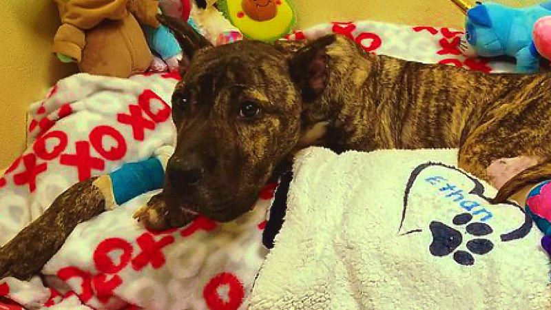 Ethan's story has garnered attention nationwide after he was left for dead at the Humane...