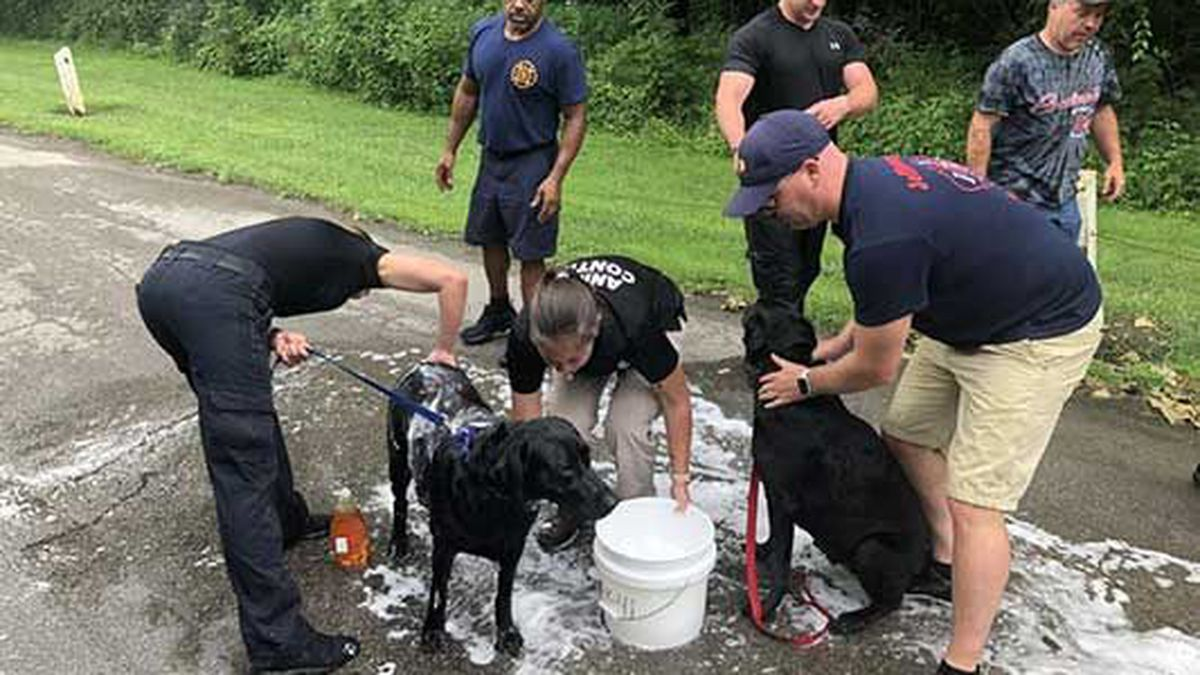 After rescuing the dogs, the police and fire department went above and beyond, giving them a...