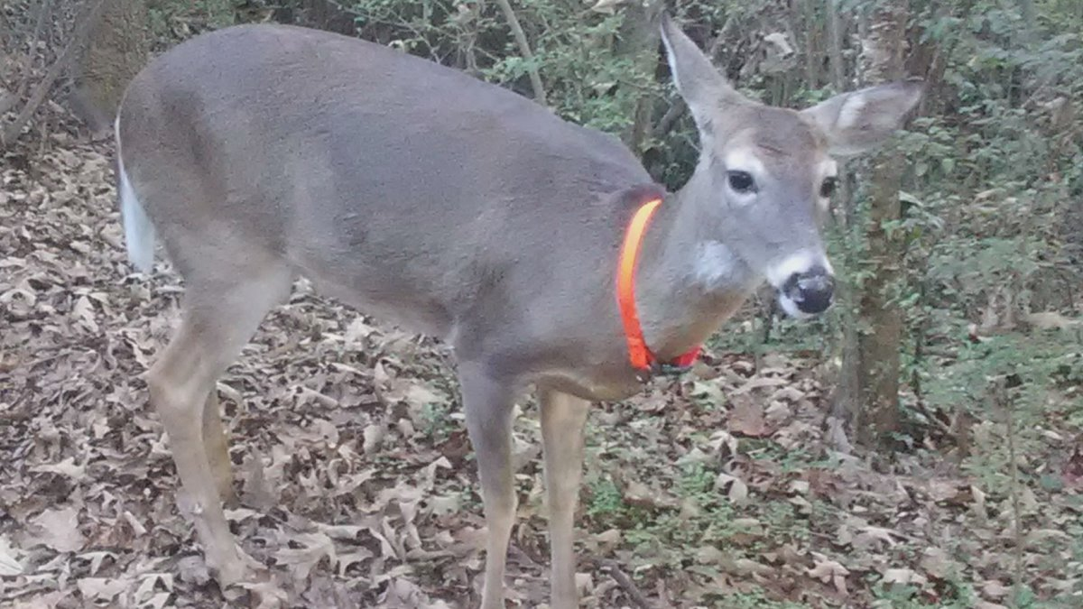 Tuscumbia community mourns the loss of a community pet.