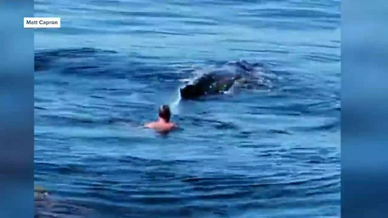 Some fishermen spotted a whale trapped by a net and freed it.