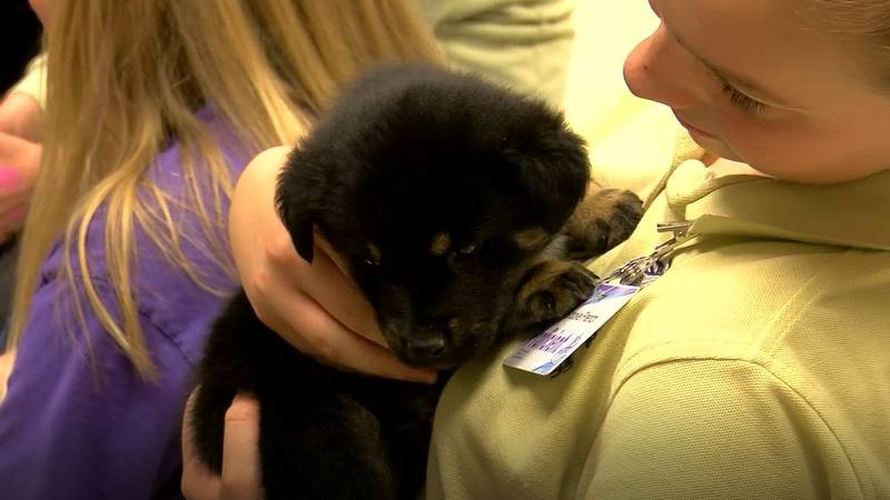 Students at Olmsted Academy South organized a Puppy Room for their classmates Wednesday.