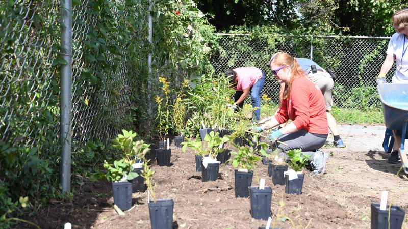 Community members plant a milkweed garden as part of the Louisville Zoo's latest conversation...