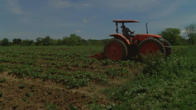 According to the 2017 Census of Agriculture, the number of young farmers in Kentucky have...
