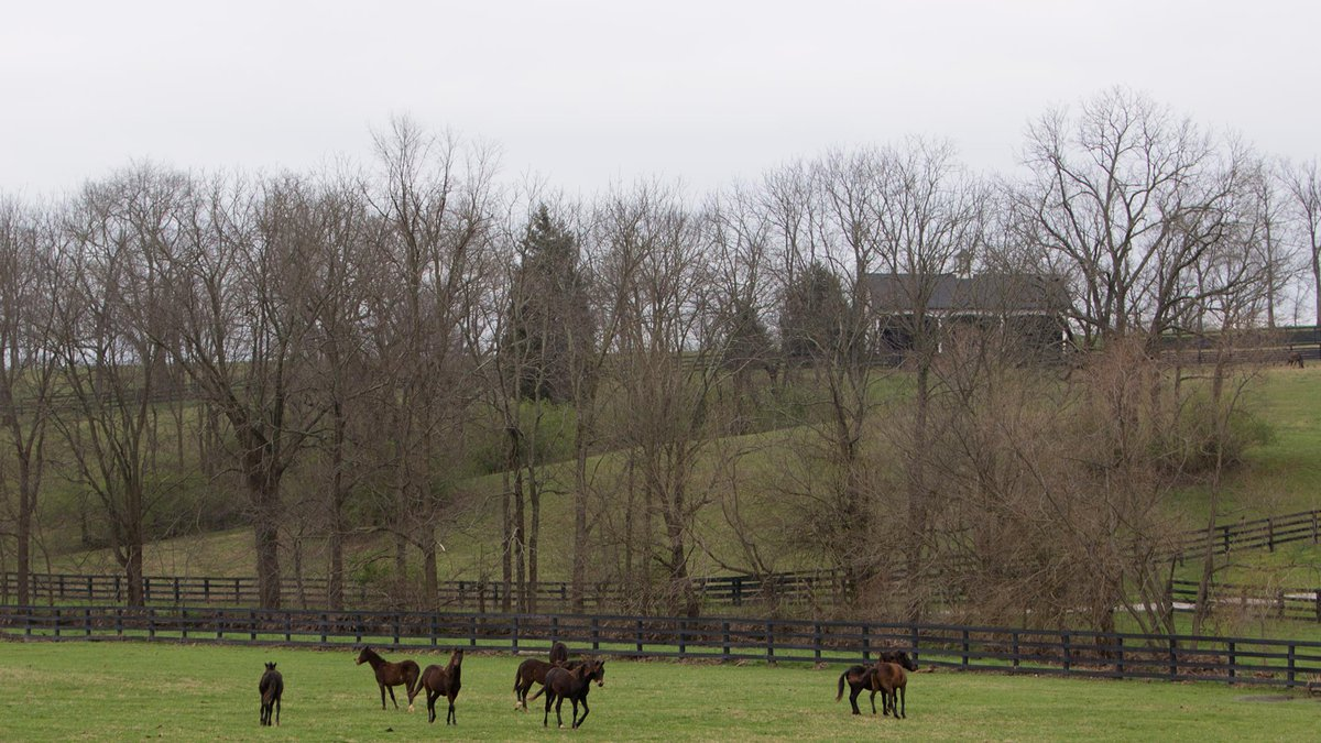While Kentucky may resemble Authentic as the mecca of horse racing, we trail the pack when it...