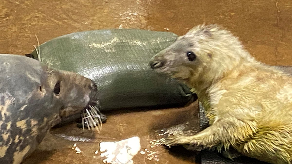"""The name Finsbay came out on top in Louisville Zoo's """"Help Us Name the Seal Pup"""" contest"""