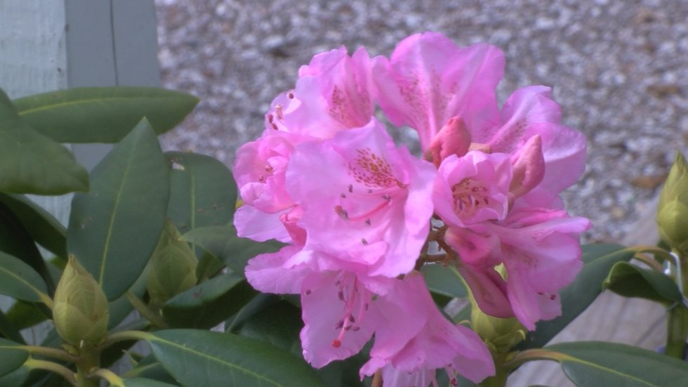 Plants with flowers or leaves may need more protection.