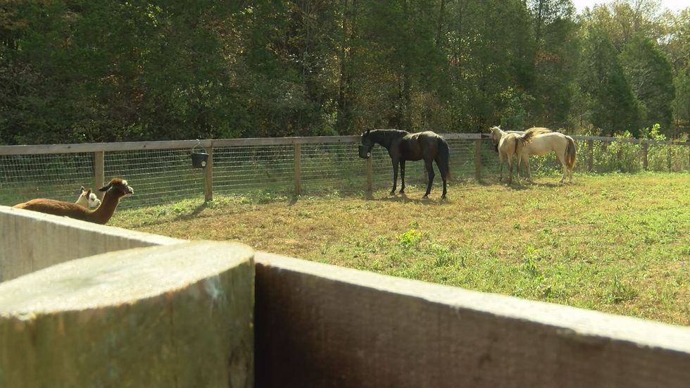 The horses are being fostered in Bullitt County. (Source: WAVE 3 News)