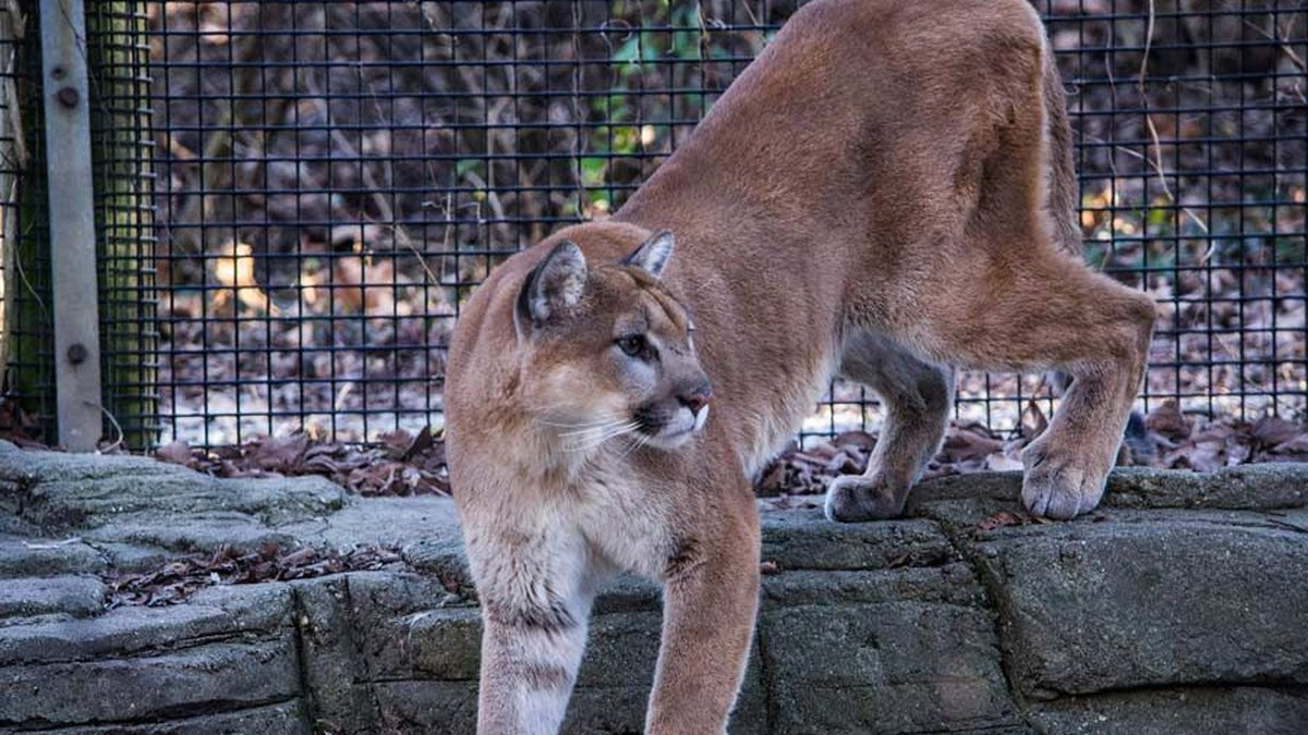 Several animals at the Louisville Zoo could soon be given doses of the COVID-19 vaccine.