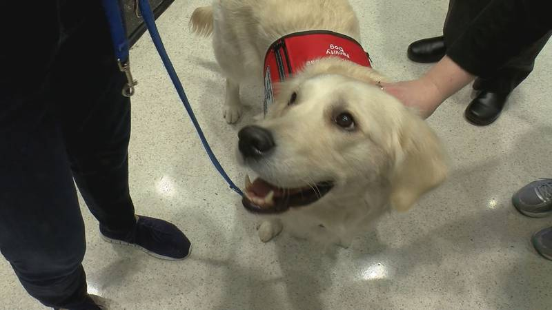 Therapy dogs are used by Norton at hospitals across Louisville. (Source: WAVE 3 News)